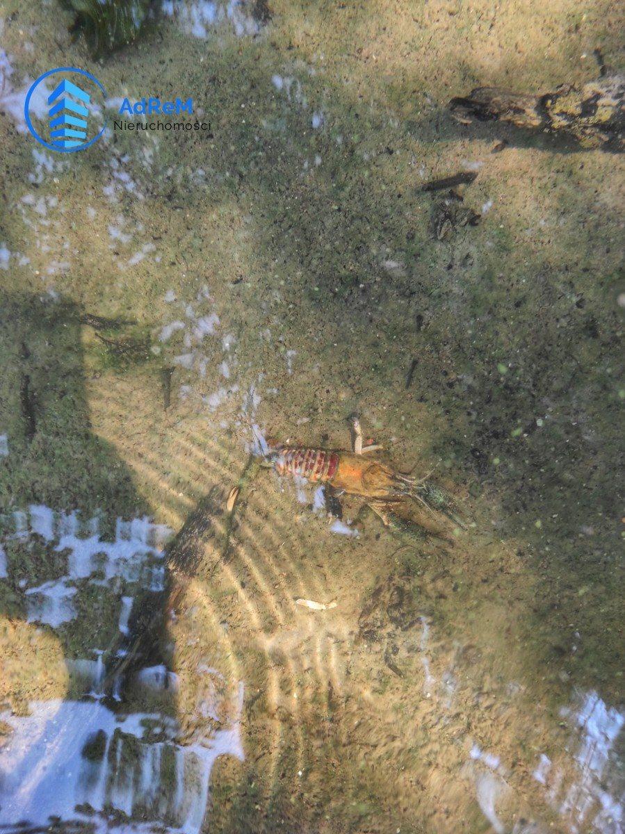 Działka rolna na sprzedaż Przerośl  13500m2 Foto 5