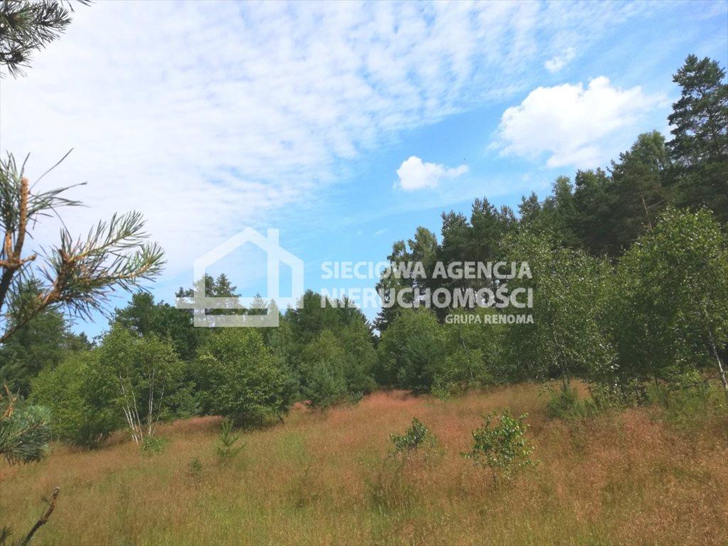 Działka rolna na sprzedaż Załęże  6400m2 Foto 2