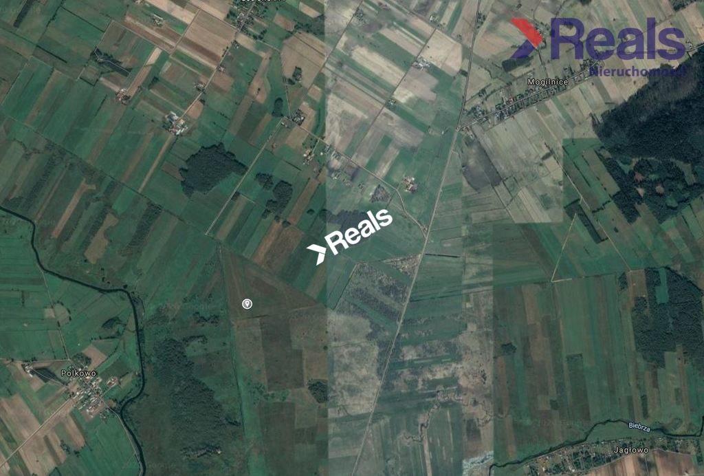 Działka rolna na sprzedaż Jaziewo  140000m2 Foto 4
