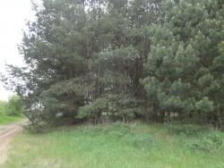 Działka leśna na sprzedaż Skroda Wielka  9200m2 Foto 3