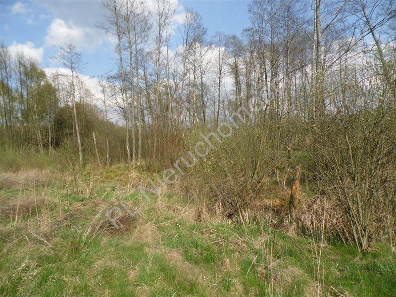 Działka rolna na sprzedaż Grzegorzewice  7200m2 Foto 1