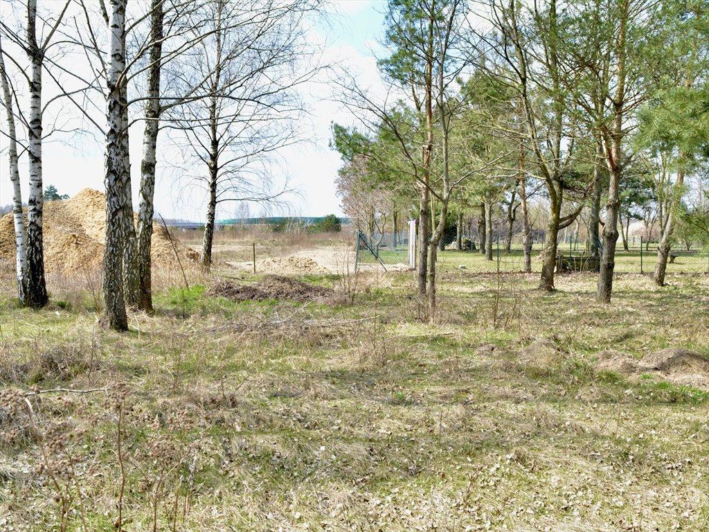 Działka rolna na sprzedaż Ryczołek  5242m2 Foto 4