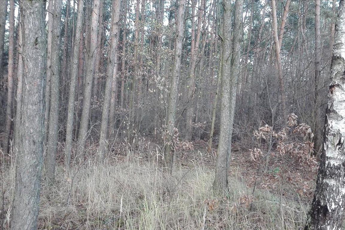 Działka leśna z prawem budowy na sprzedaż Piaseczno  2000m2 Foto 3