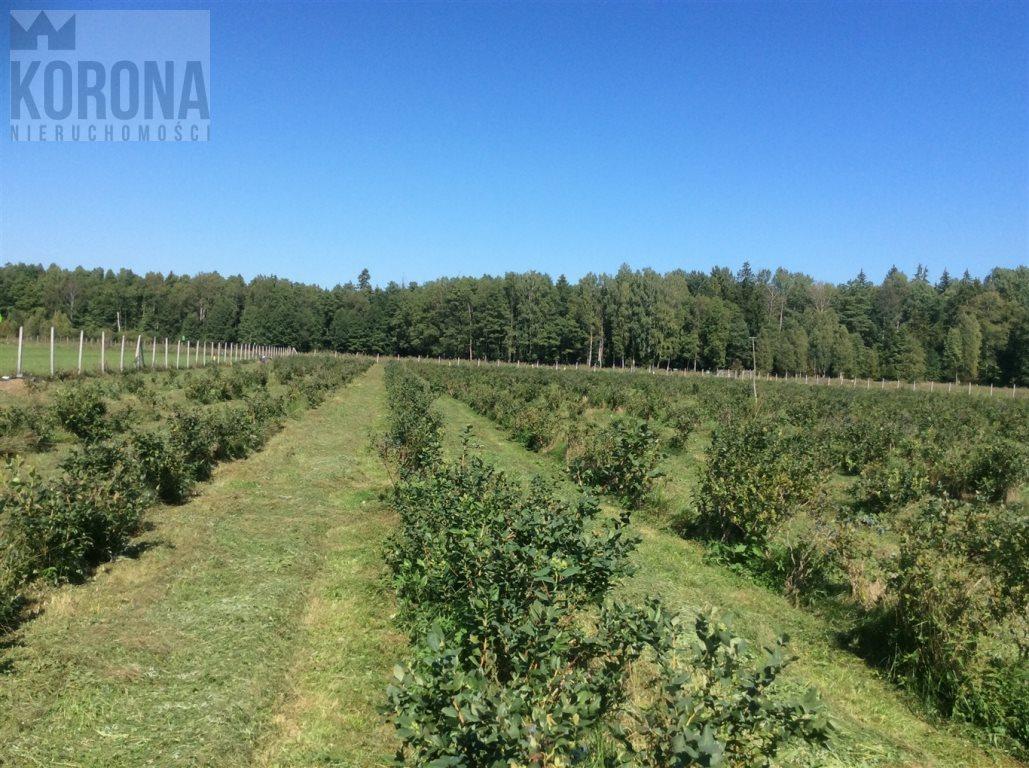 Działka rolna na sprzedaż Pasieki, Babia Góra  13300m2 Foto 2