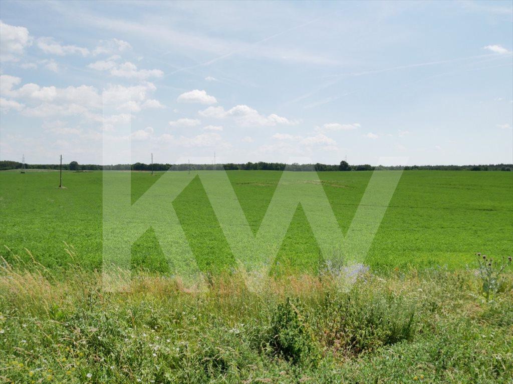 Działka rolna pod dzierżawę Białęgi  1410000m2 Foto 1