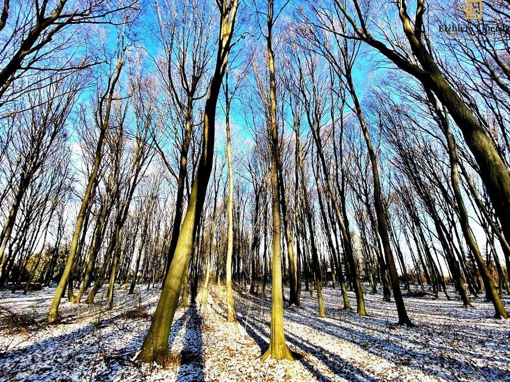 Działka leśna z prawem budowy na sprzedaż Konopnica  8900m2 Foto 4