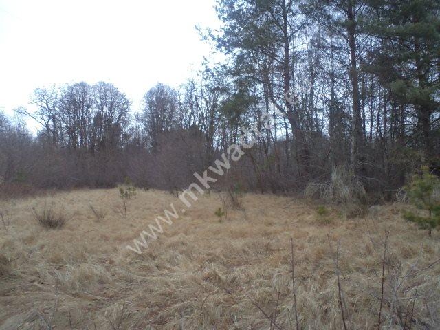 Działka leśna na sprzedaż Raducz  8600m2 Foto 1
