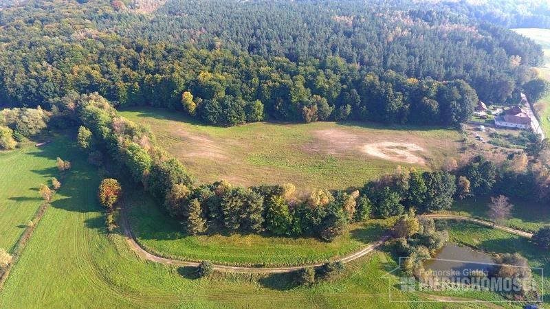 Działka siedliskowa na sprzedaż Silnowo, Jezioro, Las  23250m2 Foto 5