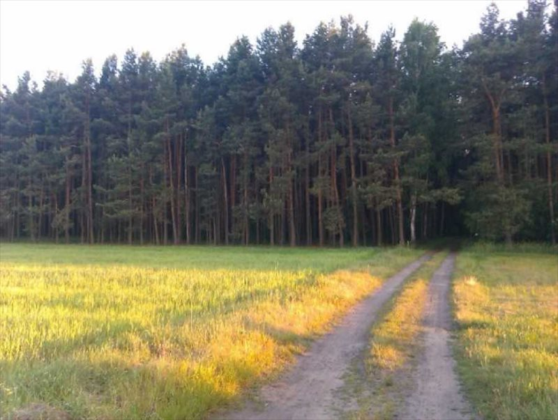 Działka rolna na sprzedaż Miłoszyce  1380m2 Foto 4