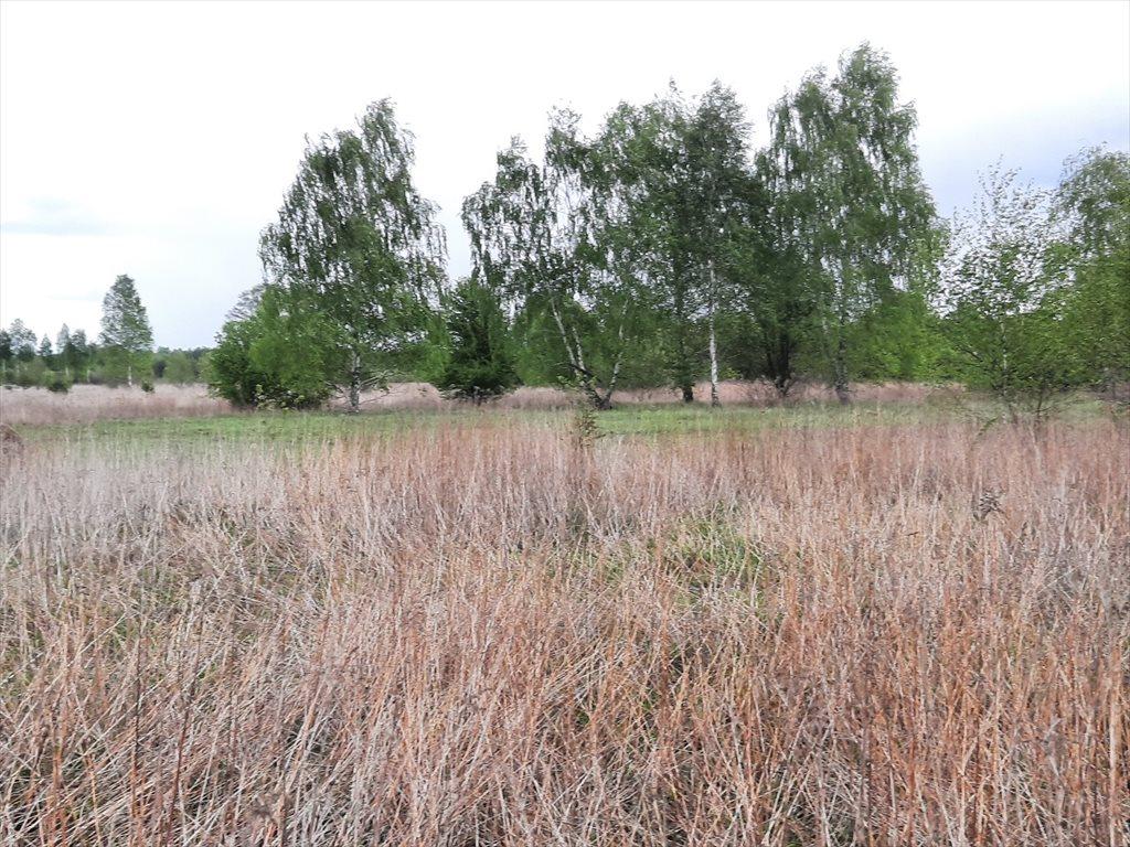 Działka rolna na sprzedaż Stare Babice, Wojcieszyn  1400m2 Foto 5
