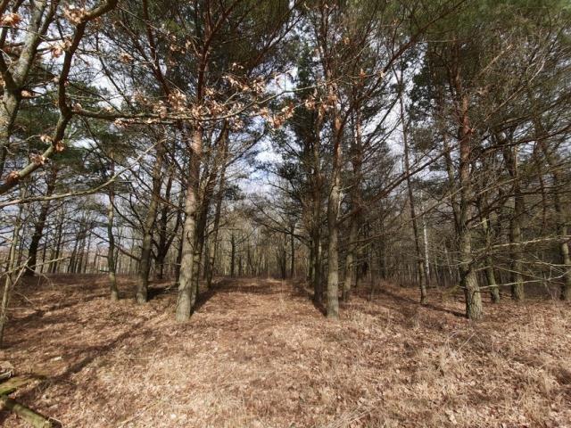 Działka leśna na sprzedaż Grądzkie  1404m2 Foto 2