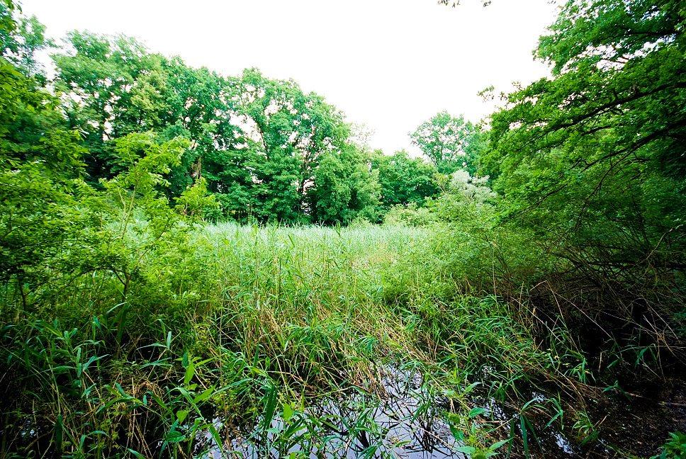 Działka leśna na sprzedaż Grodzanów  46000m2 Foto 8