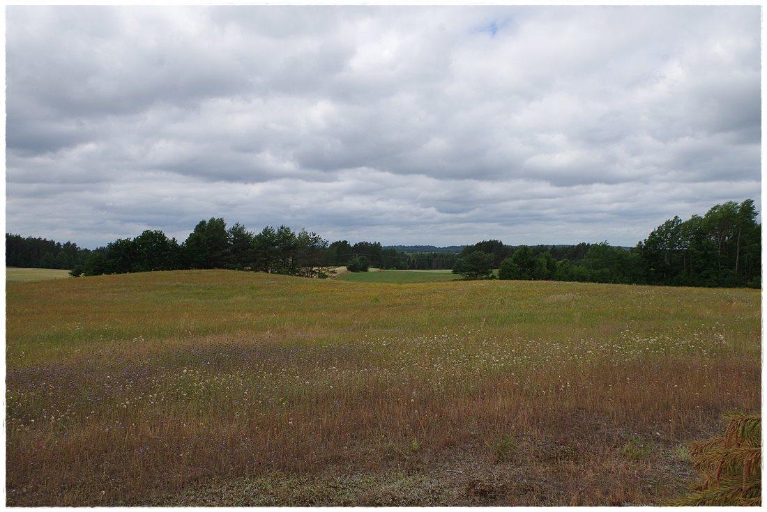 Działka rolna na sprzedaż Linia, Dębowa  12607m2 Foto 10