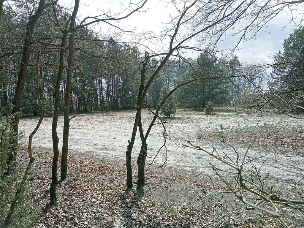 Działka rolna na sprzedaż Wola Karczewska, Wiązowna  6000m2 Foto 6