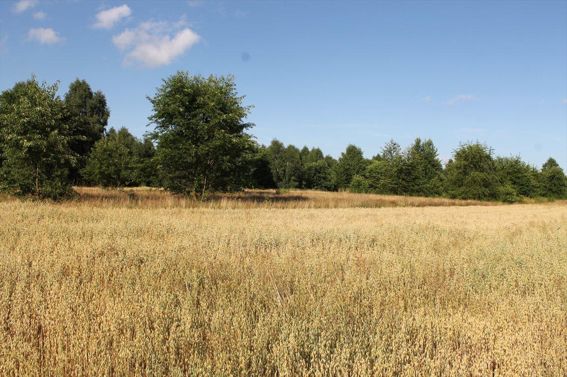 Działka rolna na sprzedaż Łagiewniki Nowe  9500m2 Foto 6