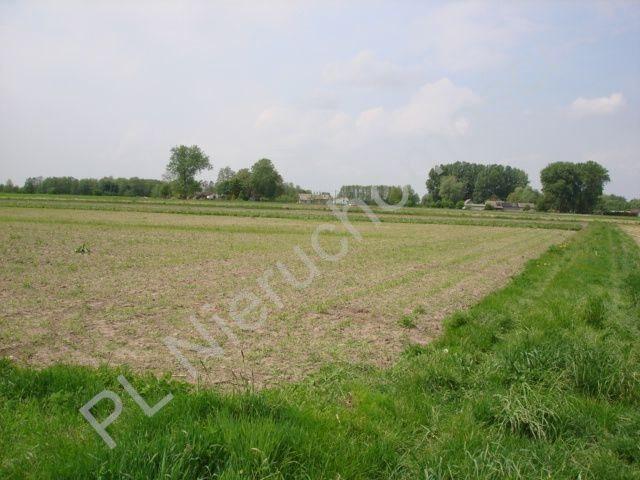 Działka rolna na sprzedaż Holendry Baranowskie  15700m2 Foto 2