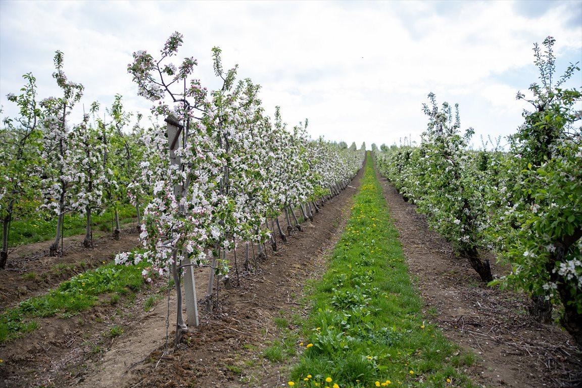 Działka gospodarstwo rolne na sprzedaż Korzenna  114m2 Foto 1