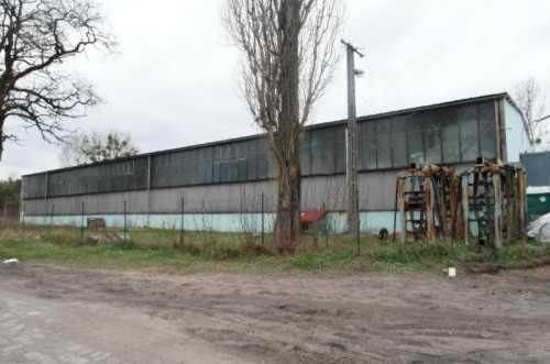 Lokal użytkowy na wynajem Grudziądz  1257m2 Foto 1