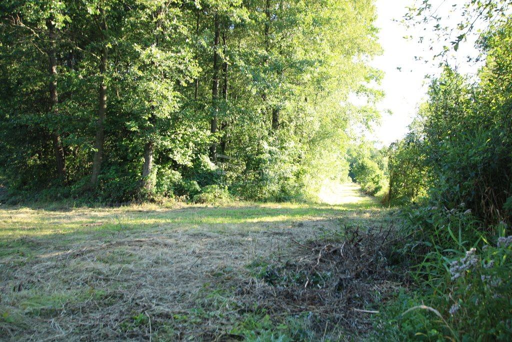 Działka leśna na sprzedaż Daniszewo  7000m2 Foto 3