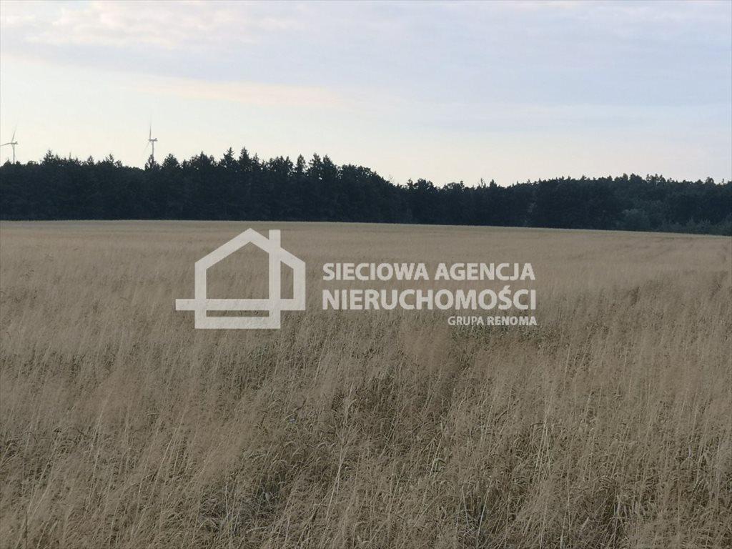 Działka rolna na sprzedaż Białogarda  148300m2 Foto 4
