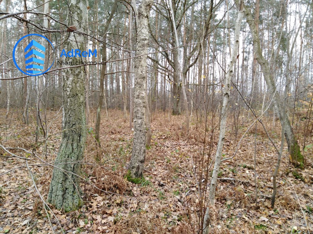 Działka leśna na sprzedaż Nowy Prażmów, Leśna  1521m2 Foto 5