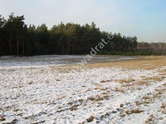 Działka rolna na sprzedaż Stanisławów  3000m2 Foto 6
