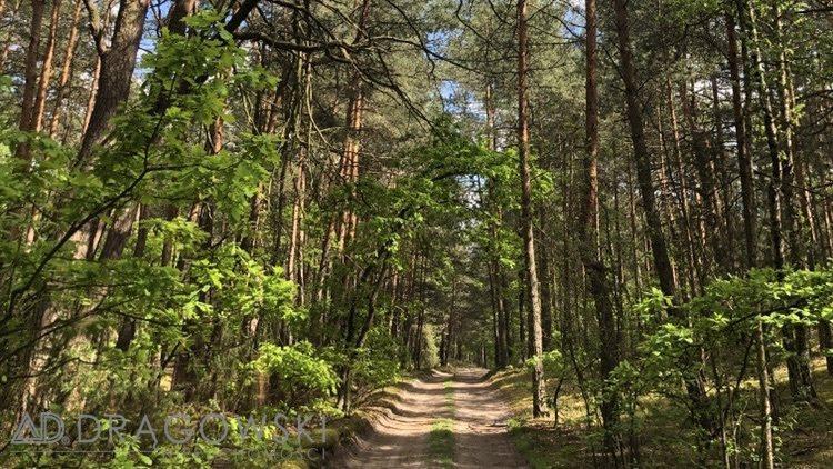 Działka leśna na sprzedaż Wilga  5369m2 Foto 2