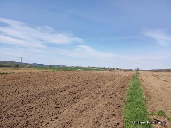 Działka rolna na sprzedaż Rogi  12000m2 Foto 2