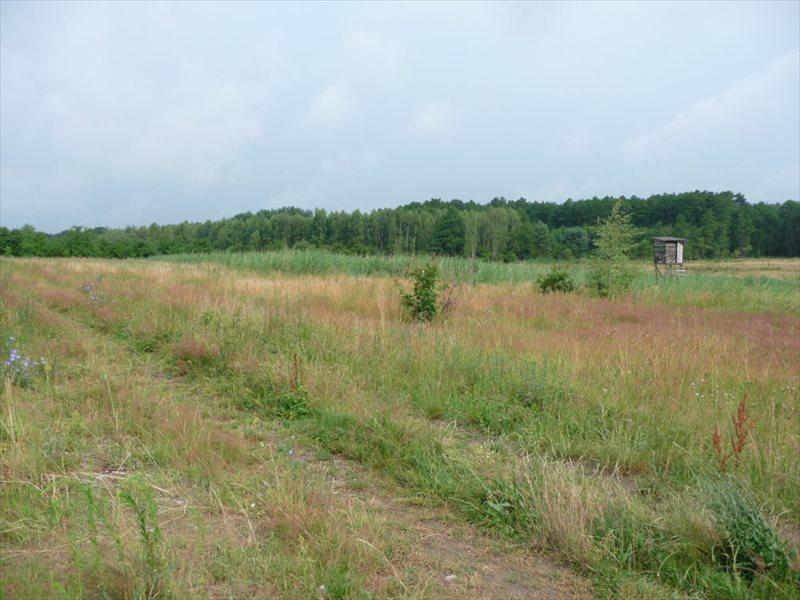 Działka rolna na sprzedaż Zielona Góra, Ochla  36500m2 Foto 4