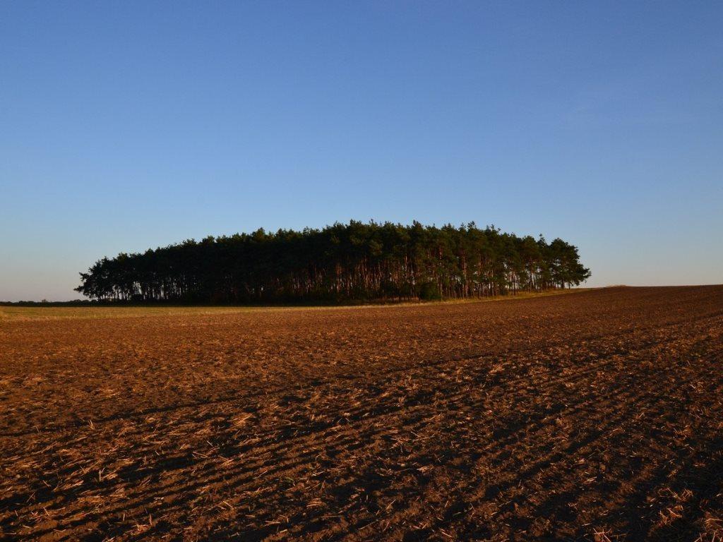 Działka leśna na sprzedaż Gogolin, Wygoda  25540m2 Foto 8