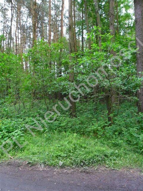 Działka rolna na sprzedaż Stanisławów  26000m2 Foto 4
