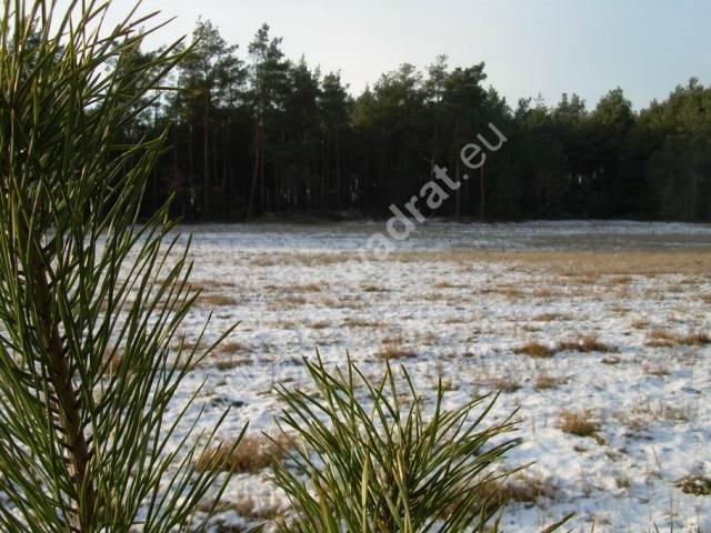 Działka rolna na sprzedaż Stanisławów  3000m2 Foto 11