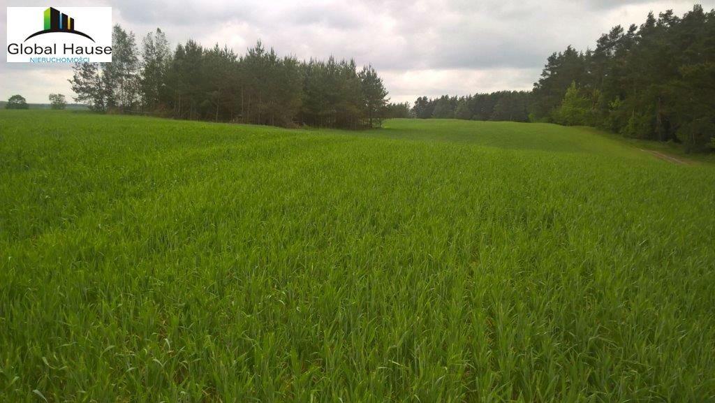 Działka rolna na sprzedaż Nowe Krzywe  3080m2 Foto 7