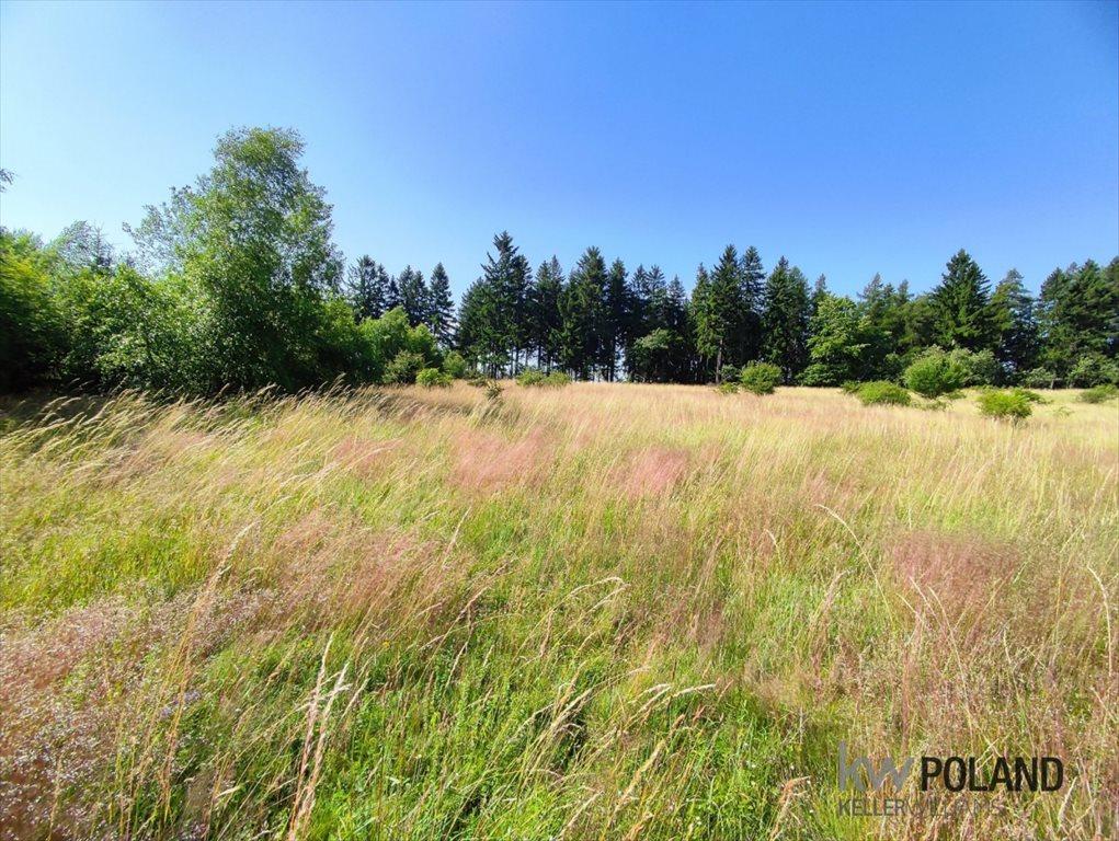 Działka rolna na sprzedaż Kudowa-Zdrój, Pstrążna  7250m2 Foto 8
