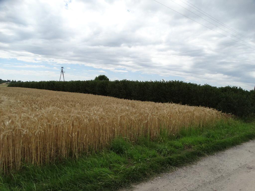 Działka rolna na sprzedaż Skrobów  10600m2 Foto 3
