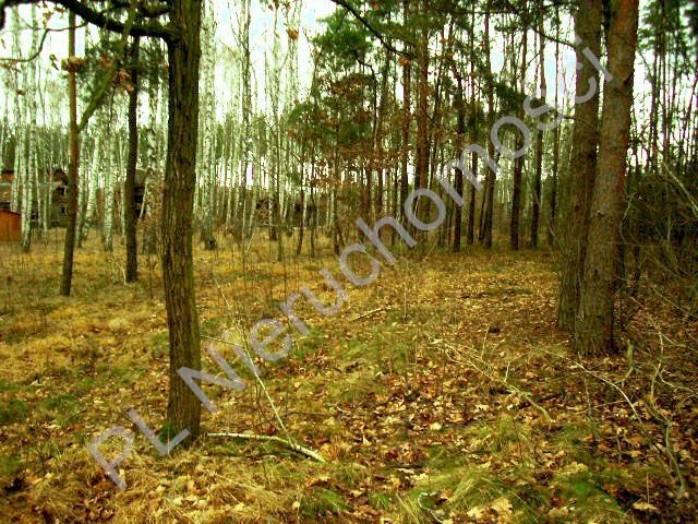 Działka leśna na sprzedaż Lesznowola  1918m2 Foto 4