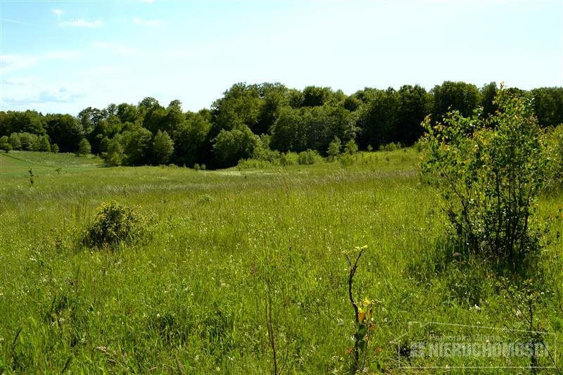 Działka siedliskowa na sprzedaż Silnowo, Jezioro, Las, działka  3001m2 Foto 9
