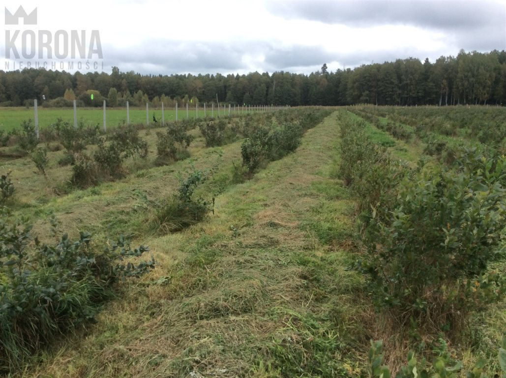Działka rolna na sprzedaż Pasieki, Babia Góra  13300m2 Foto 7