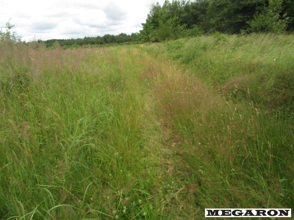 Działka leśna na sprzedaż Rzerzęczyce  25401m2 Foto 6