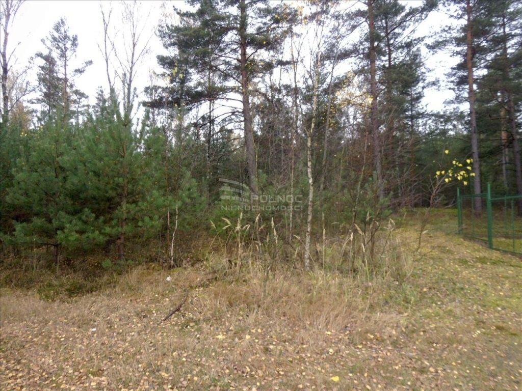 Działka leśna na sprzedaż Przejęsław  9799m2 Foto 1