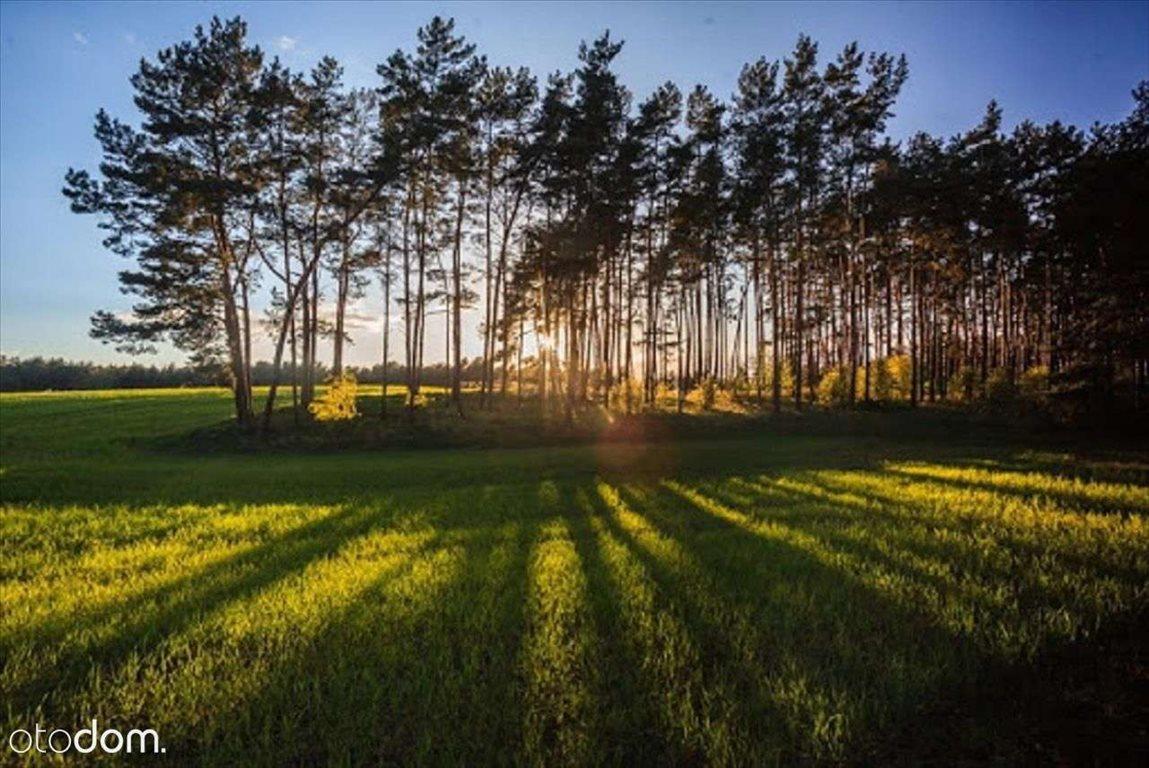 Działka rolna na sprzedaż Wiejca  74823m2 Foto 3