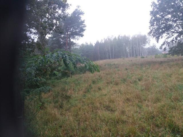 Działka budowlana na sprzedaż Dębogóra  6993m2 Foto 9