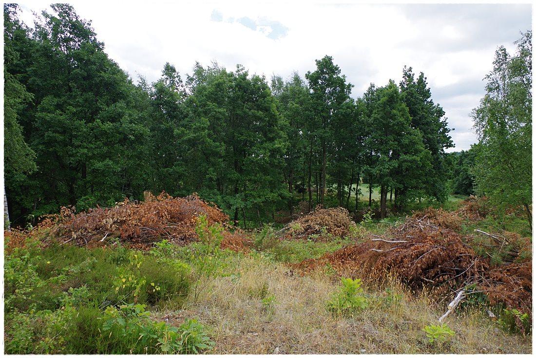 Działka rolna na sprzedaż Linia, Dębowa  12607m2 Foto 8