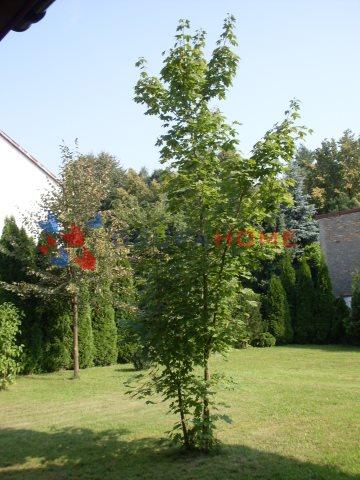 Dom na sprzedaż Jastrzębie  260m2 Foto 13