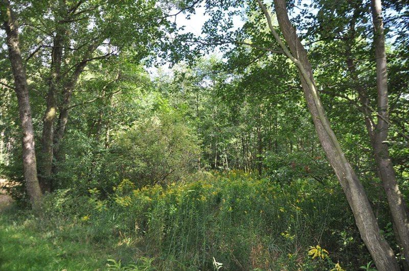 Działka rolna na sprzedaż Sulistrowice  4100m2 Foto 12