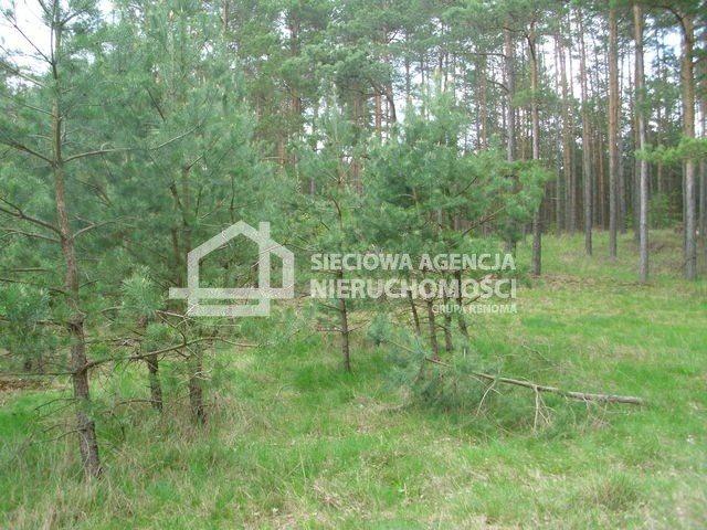 Działka siedliskowa na sprzedaż Miedzno  4564m2 Foto 6