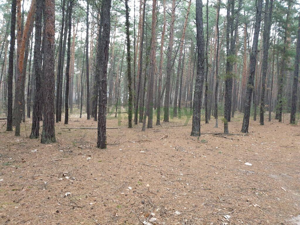 Działka leśna z prawem budowy na sprzedaż Sękocin-Las  2100m2 Foto 2