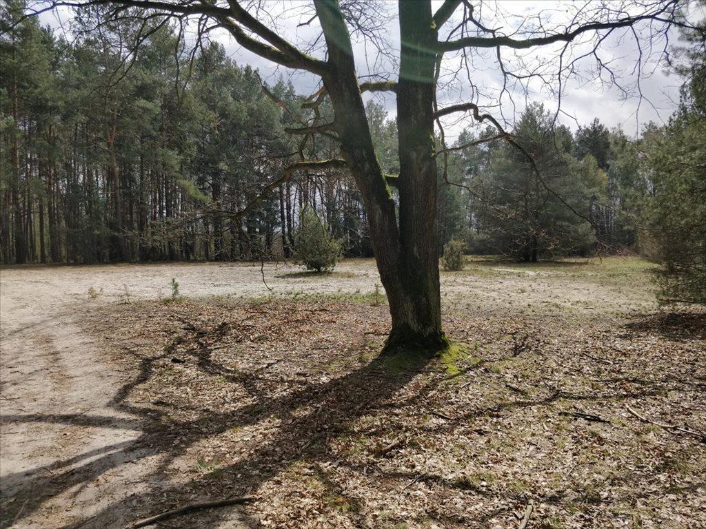 Działka rolna na sprzedaż Wola Karczewska, Wiązowna  6000m2 Foto 3