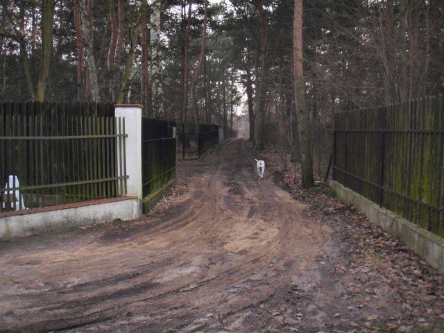 Działka budowlana na sprzedaż Warszawa, Wawer, Radość  2315m2 Foto 2