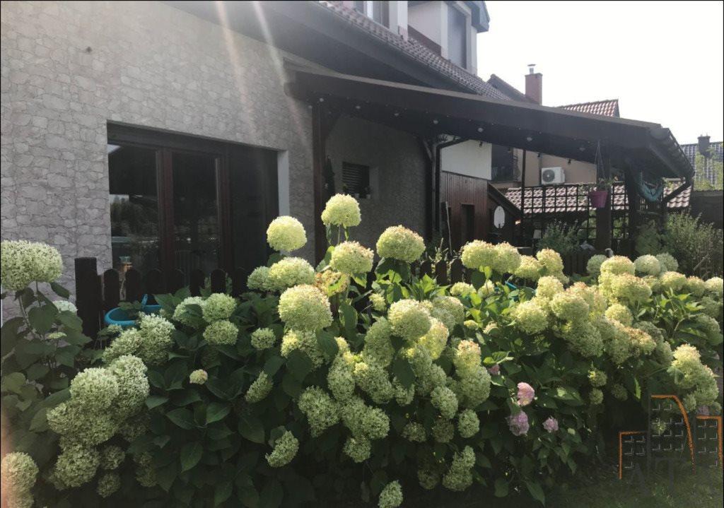 Dom na sprzedaż Wilkszyn  256m2 Foto 5